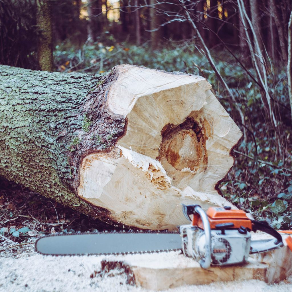 forestry logging tree felling